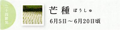 芒種(ぼうしゅ)初候 蟷螂生(かまきりしょうず)|七十二候と旬のおはなし