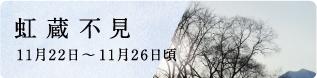 立冬(りっとう)末候 金盞香(きんせんかさく)|七十二候と旬のおはなし