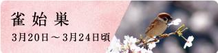 春分(しゅんぶん)次侯 桜始開(さくらはじめてひらく)|七十二候と旬のおはなし