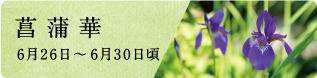 夏至(げし)末候 半夏生(はんげしょうず)|七十二候と旬のおはなし