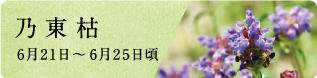 夏至(げし)次候 菖蒲華(あやめはなさく)|七十二候と旬のおはなし