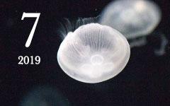 鏡花水月/アポロ11号/ムーンソルト/月の模様/海月