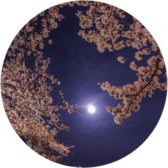 4月の満月|満月の日コラム