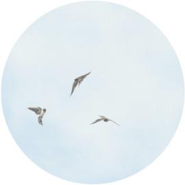 玄鳥去(つばめさる)イメージ