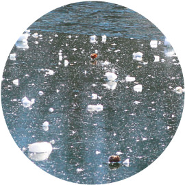 地始凍(ちはじめてこおる)イメージ画像