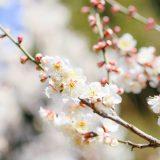 立春 りっしゅん