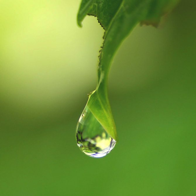 雨水 うすい|二十四節気と七十二候|暦生活