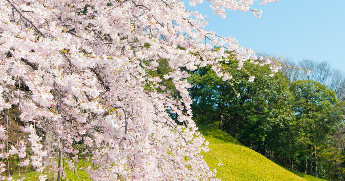 春分 二十四節気のページ 暦生活