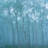 蒙霧升降 ふかききりまとう
