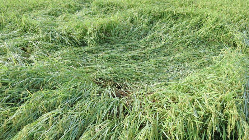 日 こそ の 枕草子 野 の また 分 『枕草子』千年のあゆみ ちくま学芸文庫 島内 裕子 webちくま