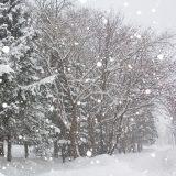 大雪 たいせつ