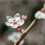 手づくり二十四節気 「立春」